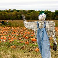 Powell Pumpkin Patch