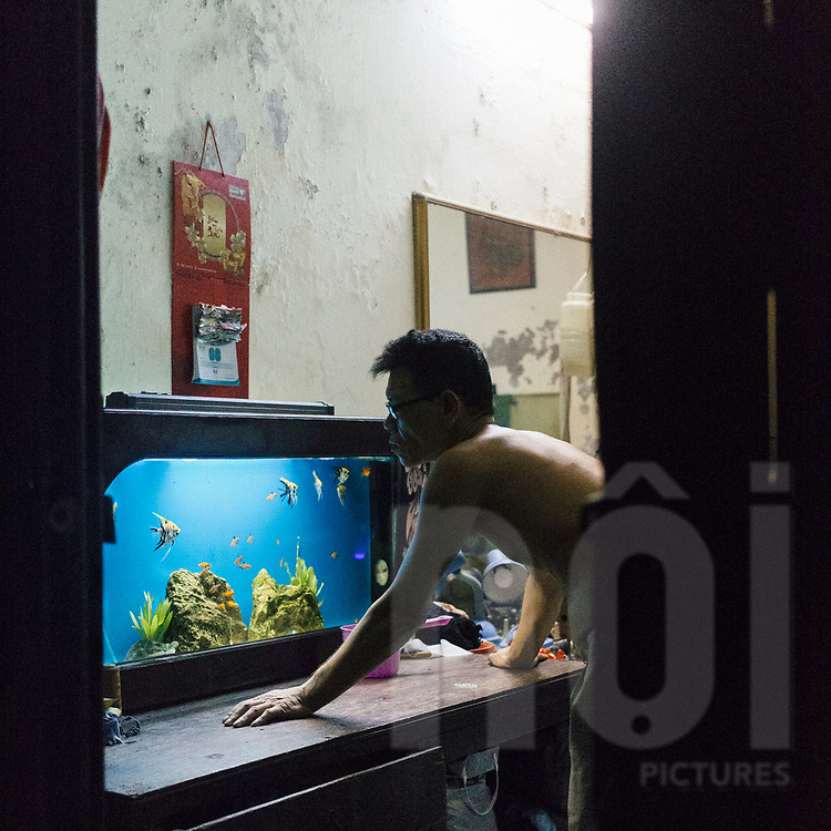 A vietnamese man stares at his aquarium, Hanoi, Vietnam, Southeast Asia