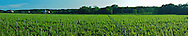 Shinn Estate Vineyard, Mattituck, Oregon Road, Long Island, New York North Fork, panorama