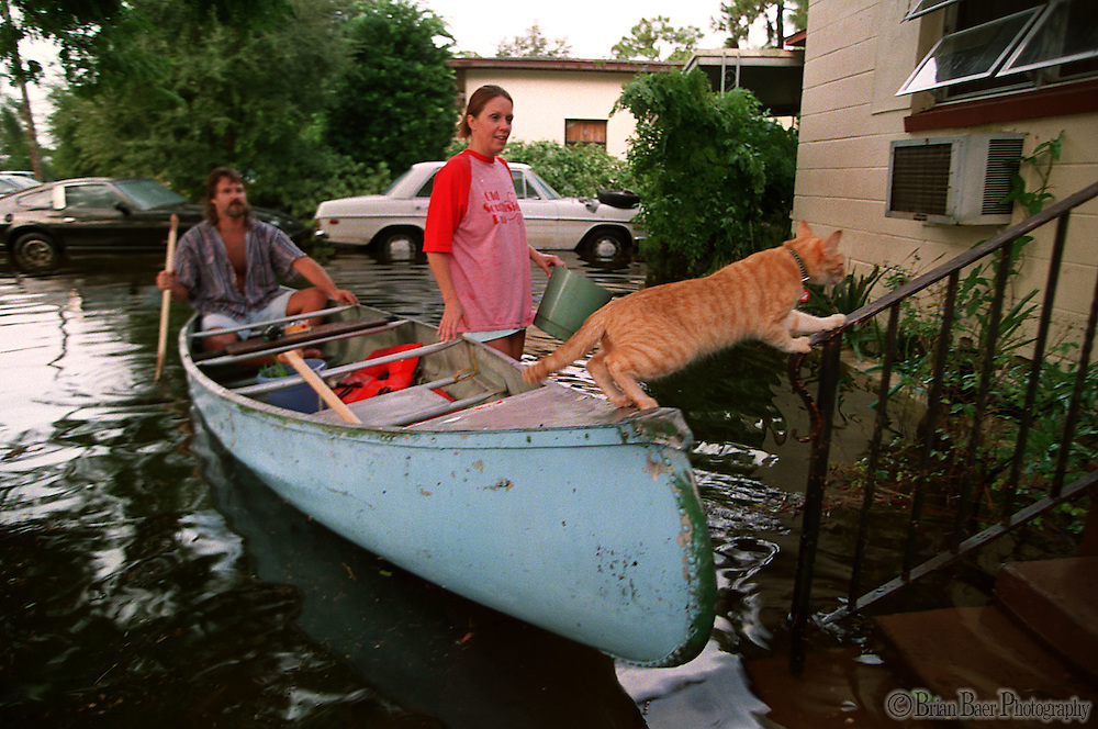 The family Cat returns to his St. Petersburg FL. home with its owners after they were forced to leave due to flooding the night before.