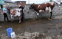 © Licensed to London News Pictures.14/07/15<br /> Harrogate, UK. <br /> <br /> Women wash their cattle down on the opening day of the Great Yorkshire Show.  <br /> <br /> England's premier agricultural show opened it's gates today for the start of three days of showcasing the best in British farming and the countryside.<br /> <br /> The event, which attracts over 130,000 visitors each year displays the cream of the country's livestock and offers numerous displays and events giving the chance for visitors to see many different countryside activities.<br /> <br /> Photo credit : Ian Forsyth/LNP