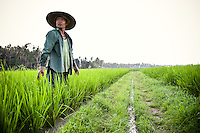 Indonesian rice farmer stands over his crop early in the morning in Bali, Indonesia.