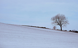 © Licensed to London News Pictures. <br /> 29/01/2015. <br /> <br /> Danby, United Kingdom<br /> <br /> A lone tree stands against the morning sky after overnight snow in North Yorkshire. A wintery blast causing extremely cold weather is expected to cause some disruption over the next few days.<br /> <br /> Photo credit : Ian Forsyth/LNP