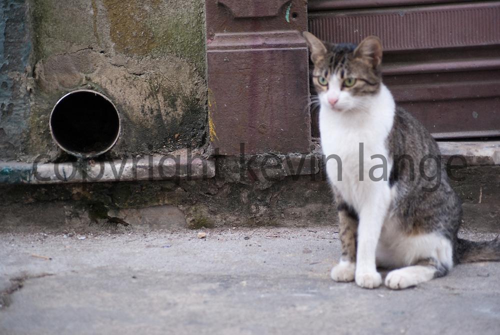 a stray cat on the streets of centro rio de janeiro, brazil.