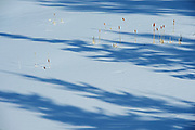 Tree shadows on snow in wetland<br />