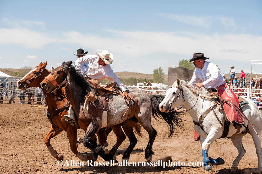 Miles City Bucking Horse Sale, pickup men, Jay Shaw, Lynn Ashley, Cody Shaw, saddle bronc, Montana, MODEL RELEASED, PROPERTY RELEASED on riders & horses only..