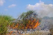 A burning bush - biblical make believe