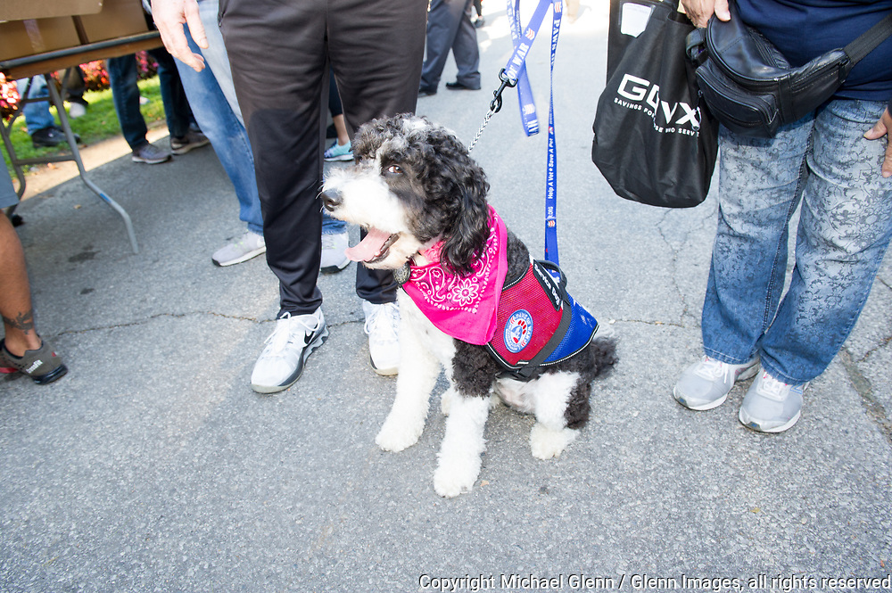 1 Oct 2017 Elmont, New York United States of America // Rosie the service dog just before the 3RD annual national stair climb for fallen firefighters at the Belmont Park racetrack  Michael Glenn  /   for the FDNY