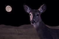 Special Division - Creative Digital Effects<br /> Photographer:  Leslie Natale<br /> Property:  Jay Welder Ranch / Jane Welder Robb, Kathleen Welder Carey, John Welder V<br /> Calhoun County