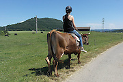 Slow moo-tion: The farm that lets visitors saddle up on COWS rather than horses (but treks can take a while as the bovines love to graze)<br /> <br /> Visitors to a farm in the Swiss Alps may be surprised to find that instead of saddling up on a horse - they get to ride cows.<br /> Bolderhof Farm offers guests the chance to clamber onto the back of one of the hoofed creatures for treks lasting up to half a day.<br /> The owner of the farm says that unlike horses, dairy cows are less likely to react to scenarios around them, meaning the risk of falling off is slim.<br /> <br /> Guests are able to get acquainted with their bovine in a short meet and greet, according to Smithsonian, before putting on a helmet and saddling up for the unusual experience.<br /> Despite their large size, the herbivores' speed ranges from 'slow to very slow' - perfect for enjoying the woods and rivers of the Rhine lowlands.<br /> In fact their pace is so glacial that rides in the past have been delayed by cows whose attention is more preoccupied with grazing rather than completing the journey.<br /> <br /> But what the experience does offer is a peaceful and stress-free amble through the beautiful rolling Swiss Alps. <br /> 'If something happens around you, the cow stands still and looks,' Bolderhof Farm owner Heinz Morgenegg told the Smithsonian. <br /> After a slow trek through the countryside, wannabe cowboys can enjoy a picnic spread of organic meat, cheese, bread and wine.<br /> <br /> The cow trekking experience started after Morgenegg queried what would happen if he climbed onto the back of one of his herd.<br /> As the bovine lay on the ground he clambered on, with the cow barely reacting to his rider. <br /> Years later, and the farm has cow trekking as a permanent attraction with people from all over the globe flocking to stroll on his prized animals.<br /> <br /> For those who aren't keen to hop on a cow, there are a range of other activities available on the farm. <br /> Guests 