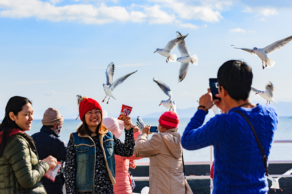 Feeding the very hungry seagulls on Kumamoto ferry.