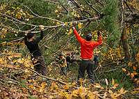 Mike Baron and Steve Schor along with approximately 20 other volunteers work to clear the trails made impassable throughout Ramblin' Vewe Farm on Sunday morning following the devastation from last week's storm.  (Karen Bobotas/for the Laconia Daily Sun)