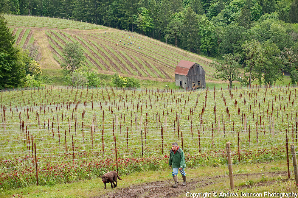 Colene Clemens vineyard, Yamhill-Carlton AVA, Willamette Valley, Oregon