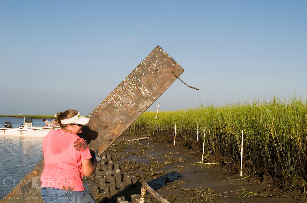 TNC Marine Restoration Specialist Joy Brown, moves a walking platform onto Pluff Mud so that the workers can construct the oyster castles without getting bogged down.