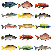 15 fish in a chart on white background