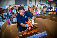 Second Harvest staff boxing fresh carrots for distribution