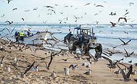 COSTA DA CAPARICA bij Almada-Lissabon PORTUGAL - vissers halen vanaf het strand de vissen binnen die ze ter plekke verkopen aan particulieren en resaturanthouders. COPYRIGHT KOEN SUYK