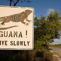 Cayman Islands, Little Cayman Island, Iguana Crossing Sign along country road