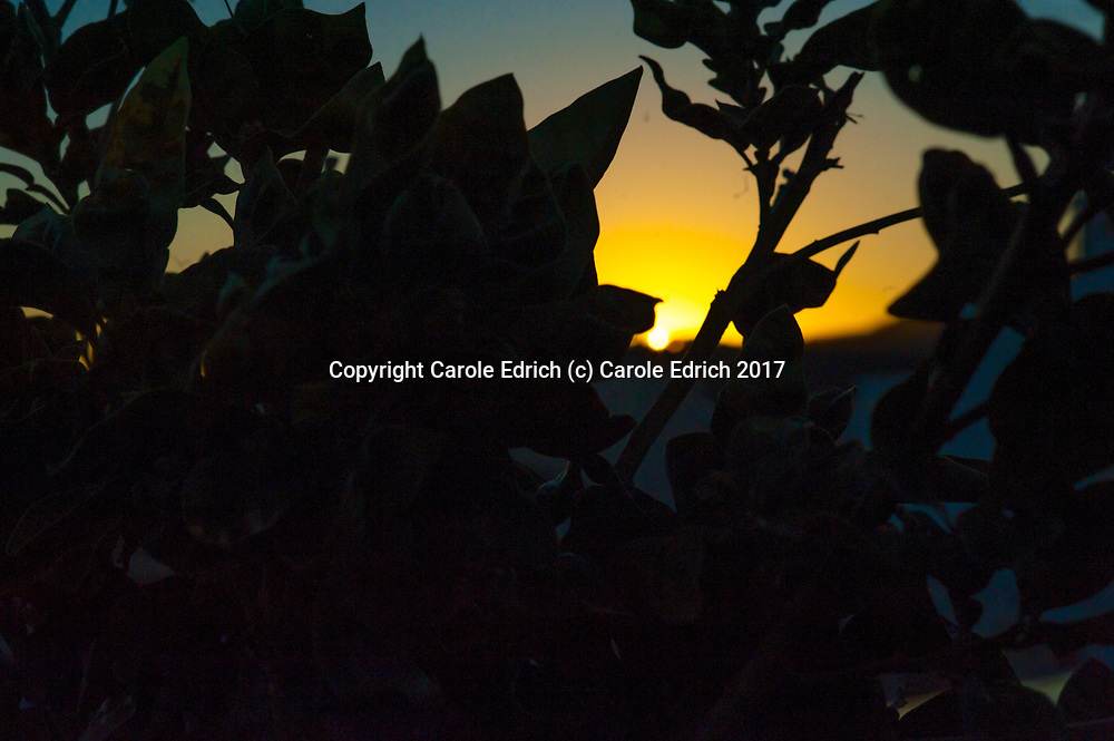 Sunrise through plants on Nakar Hotel roof. (c) Carole Edrich 2017
