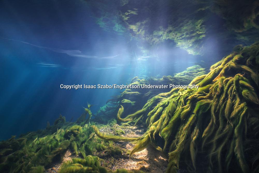 Underwater Scene<br /> <br /> Isaac Szabo/Engbretson Underwater Photography