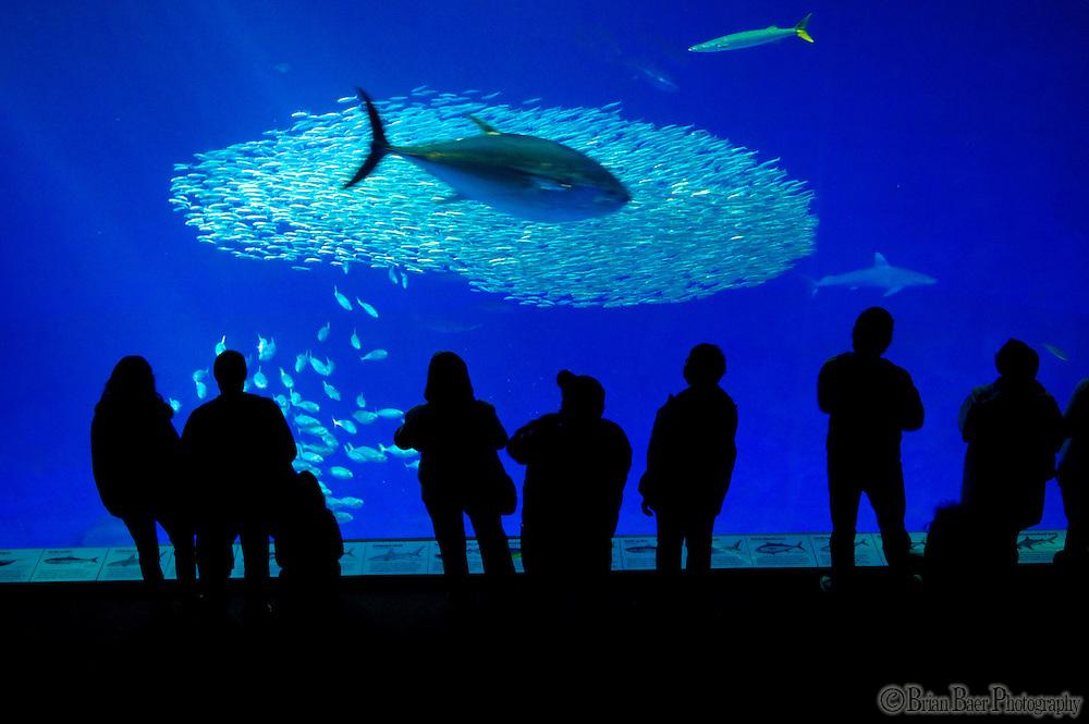 The Monterey Aquarium in Monterey CA, Monday Jan 25, 2010.