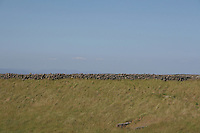 Inis Mor field Aran Islands County Galway Ireland