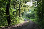 Weg durch Rehbachtal bei Michelstadt zwischen Rehbach und Steinbach, Odenwald, Naturpark Bergstraße-Odenwald, Hessen, Deutschland | track in Rehbach valley near Michelstadt, Odenwald, Hesse, Germany