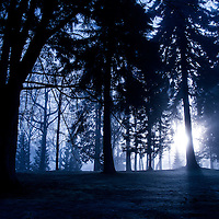 A row of trees in a blue foggy hue with light coming through casting shadows.