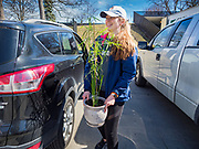 """13 MARCH 2020 - DES MOINES, IOWA: MIMI AMADEI, a first year student at Drake University, packs her car before going home for spring break. The Governor of Iowa announced Friday that 17 people in Iowa have tested positive for the Novel Coronavirus. Of those, 15 people were exposed on the same cruise in Egypt, the others were exposed through travel but were not on the same cruise. The Governor said there has not yet been any """"community spread"""" in Iowa. All of the Iowans who have tested positive are in self quarantine. Across Iowa, municipalities and businesses are taking steps to implement """"social distancing."""" Most of the colleges in Iowa, including Drake University, have announced that they will remain closed after their spring breaks and that classes will move to online only, after spring break. Many businesses in Des Moines, including Nationwide Insurance and EMC Insurance, have announced plans to have their employees to telecommute. The mayor of Des Moines has urged event planners to consider canceling large events.     PHOTO BY JACK KURTZ"""