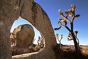 Joshua Tree National Monument, Southern California at sunrise.
