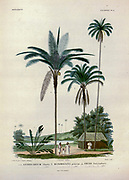 Palm trees and indigenous people of South America From the book 'Voyage dans l'Amérique Méridionale' [Journey to South America: (Brazil, the eastern republic of Uruguay, the Argentine Republic, Patagonia, the republic of Chile, the republic of Bolivia, the republic of Peru), executed during the years 1826 - 1833] By: Orbigny, Alcide Dessalines d', 1802-1857; Montagne, Jean François Camille, 1784-1866; Martius, Karl Friedrich Philipp von, 1794-1868 Published Paris :Chez Pitois-Levrault et c.e ... ;1835-1847