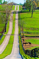 Thoroughbred horses, Woodstock Farm, Lexington, Kentucky USA.
