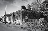 Home overgrown with vines almost ten years after Hurricane Katriana.