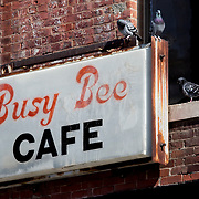 Pigeons and old sign for Busy Bee Cafe, Crossroads Dist., East 18th Street, Kansas City, Missouri.
