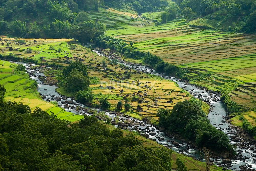 River confluence through beautful rice paddies, near Todo Village, Manggarai, Flores