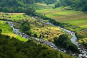 River confluence through beautful rice paddies, near Todo Village, Manggarai, Flores