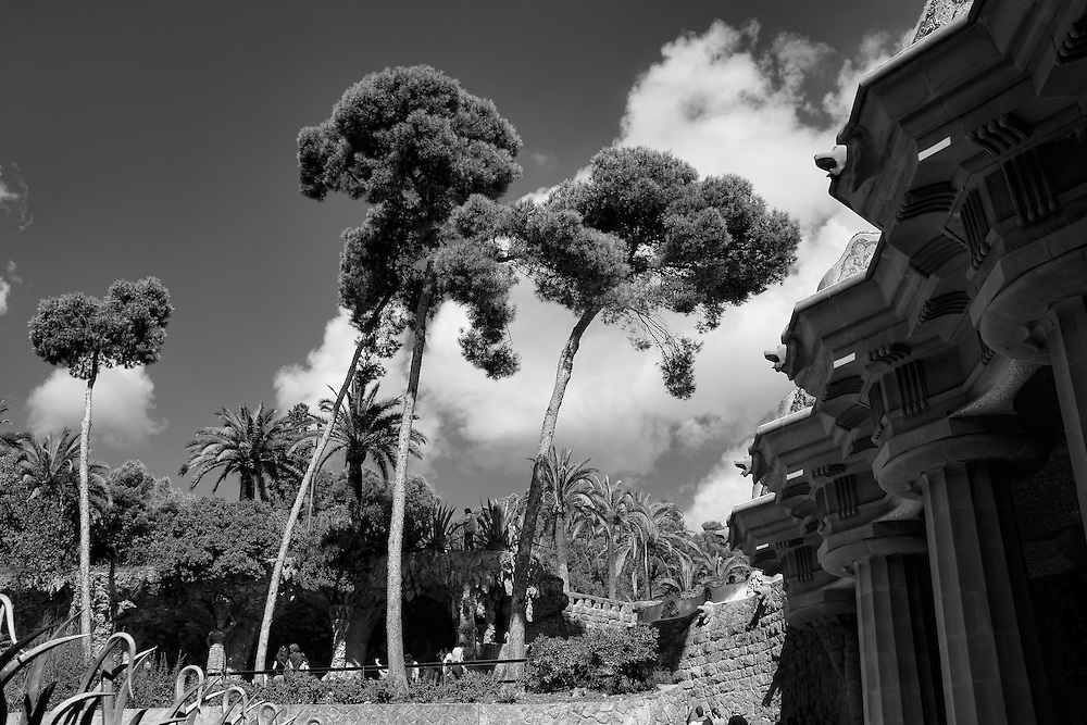 Black white impression of bending trees in Park Guell, Barcelona.