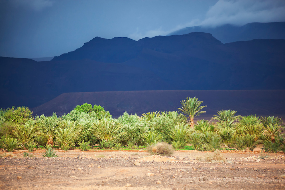 Oasis with mountains and rainy sky in the Sahara desert of Morocco.