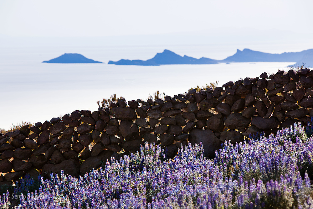 Rock walls and mountain lupine flowers are seen above the Salar de Uyuni on the flanks of Mt. Thunupa volcano.
