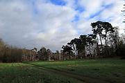 Sandlings winter landscape coniferous trees, Sutton Heath,  Suffolk, England, UK