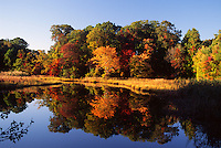Annapolis, Maryland--the colors of fall reflect on the waters of Mill Creek a tributary of the Chesapeake Bay. Water, filtered from these wetlands are important to the health of the bay and the over all health of the enviroment.