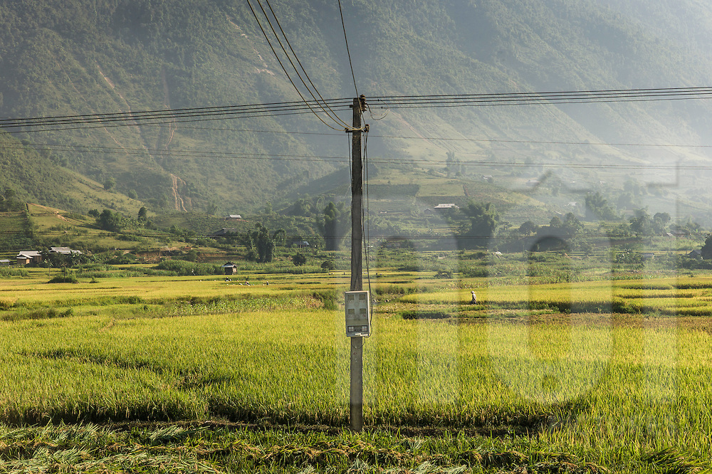 Telephone pole stands in the middle of a rice field between Nghia Lo and Mu Cang Chai, Yen Bai Province, Northern Vietnam, Southeast Asia