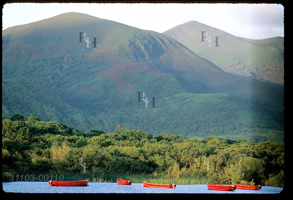 Mountains loom over fleet of red skiffs moored off Ross Island on Lough Leane in Killarney National Park, Ireland.