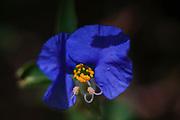 Extreme flower closeup on dark black background