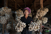Woman farmer and a harvest of garlic.