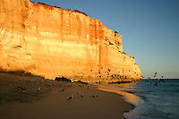 Birds fly from beach in late afternoon sun, Algarve Portugal