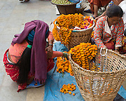 In Durbar Square, Kathmandu, Nepal, women string necklaces of marigold flowers for Dasain Festival (or Durga Puja), which is Nepal's biggest annual festival, a 15-day family affair with the biggest animal sacrifice of the year. Durga Puja celebrates the victory of the bloodthirsty goddess Durga over the forces of evil personified in the buffalo demon Mahisasura.  Outside of the city, country dwellers erect swings and makeshift ferris wheels.