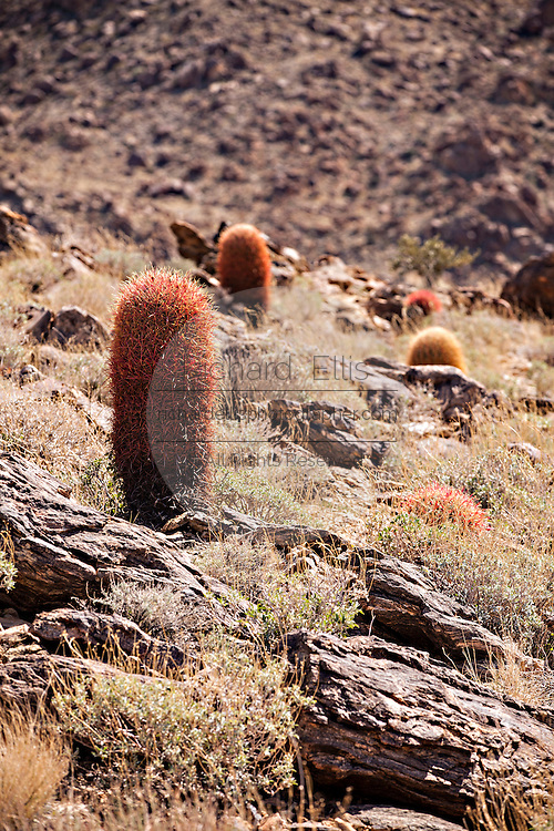 Cactus and scrub in the Mojave desert outside of Twentynine Palms, California.