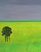Mike Harridge. Canola Field<br /> 31.5&quot;  x  39&quot;<br /> Acrylic on Canvas.<br /> 95,000/-