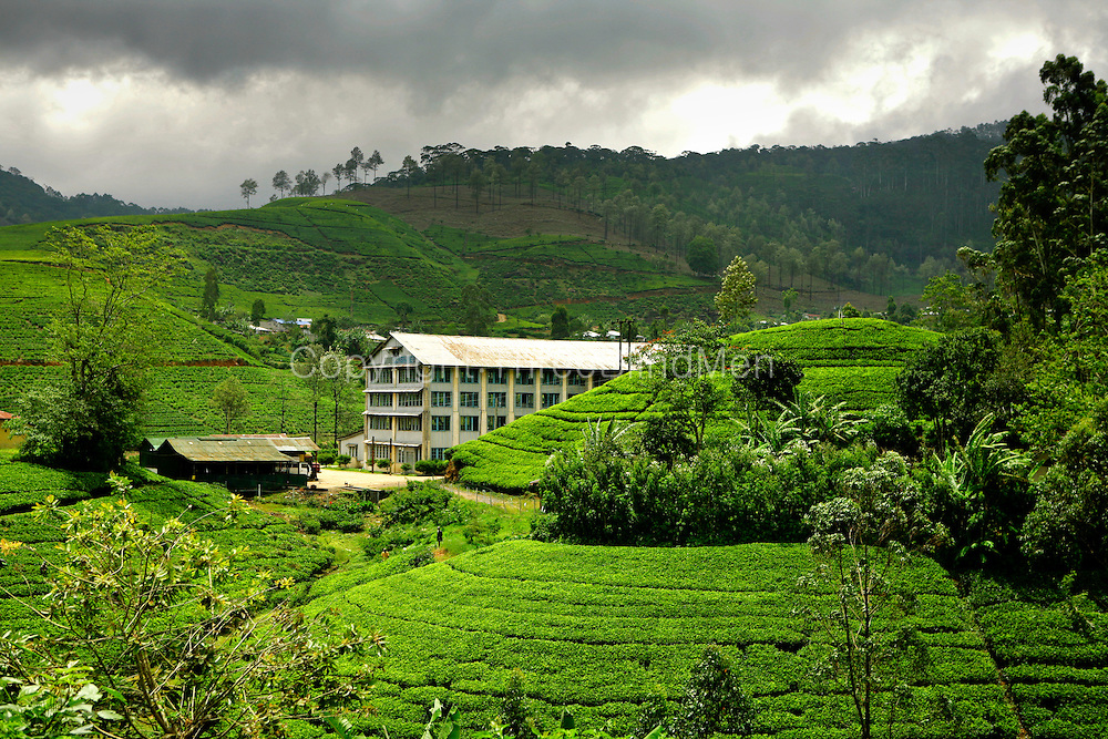 Tea Factory, Highlands of Sri Lanka.